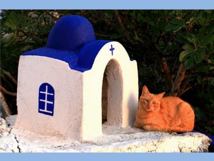 Greek cats Slide 2