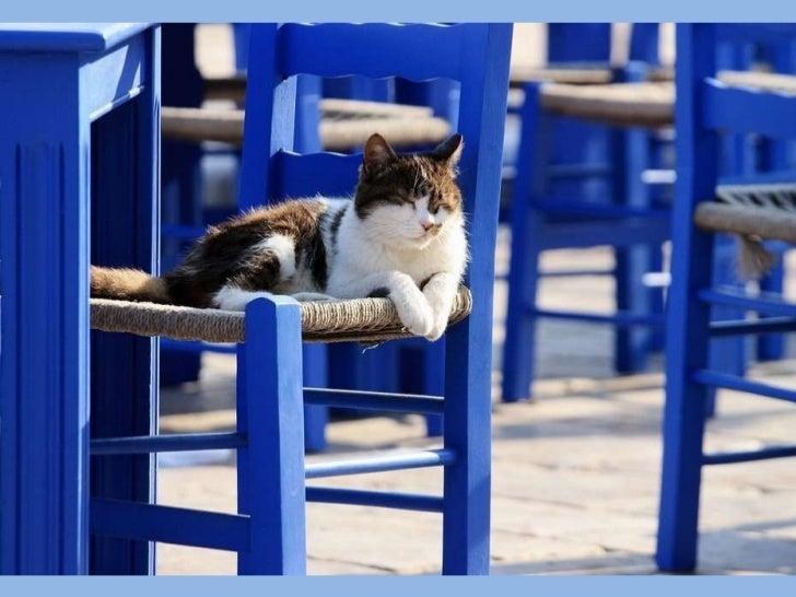 Greek cats Slide 3