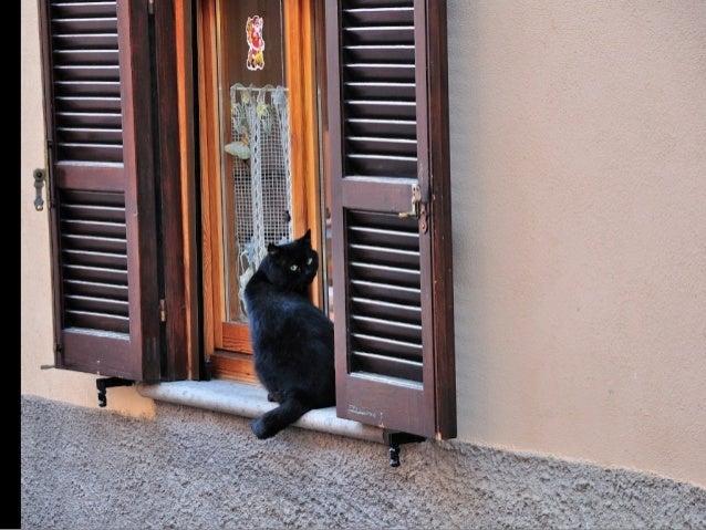 Greek Cats. (Nikos)