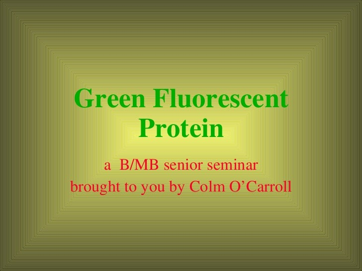 Green Fluorescent Protein a  B/MB senior seminar brought to you by Colm O'Carroll