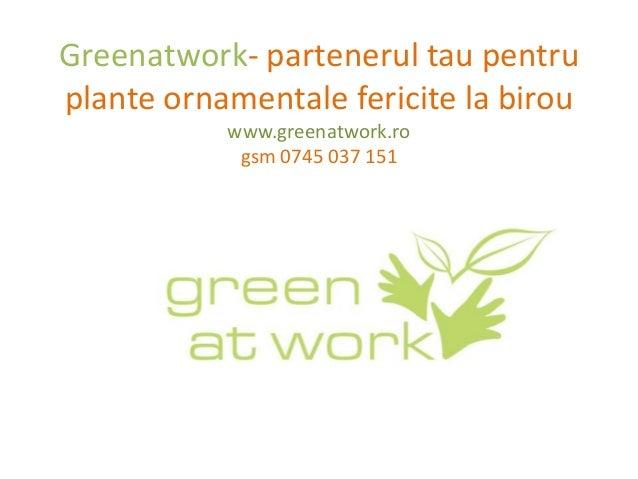 Greenatwork- partenerul tau pentruplante ornamentale fericite la birou           www.greenatwork.ro            gsm 0745 03...