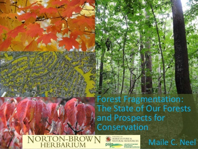 Forest Fragmentation:The State of Our Forestsand Prospects forConservation             Maile C. Neel