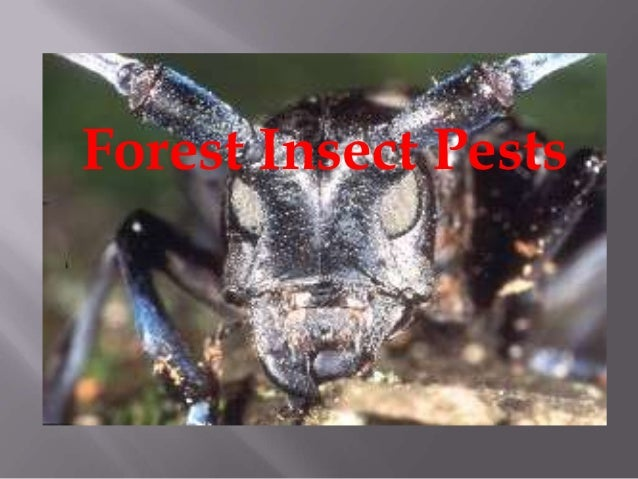 Forest Insect Pests