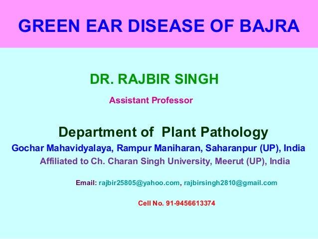 GREEN EAR DISEASE OF BAJRA DR. RAJBIR SINGH Assistant Professor Department of Plant Pathology Gochar Mahavidyalaya, Rampur...