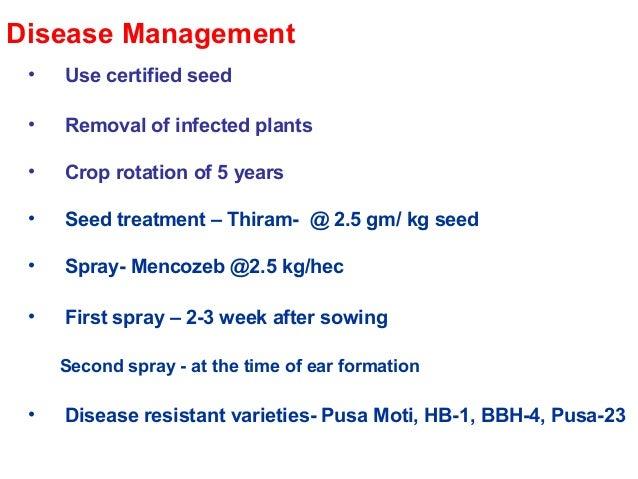 Green ear disease of bajara