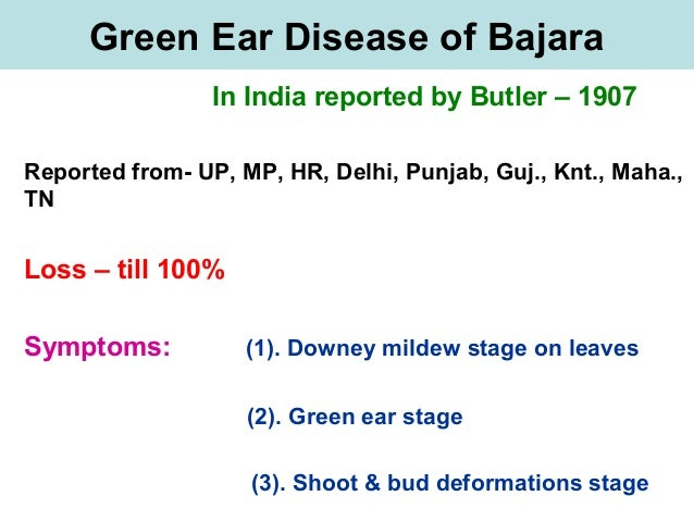 Green Ear Disease of Bajara In India reported by Butler – 1907 Reported from- UP, MP, HR, Delhi, Punjab, Guj., Knt., Maha....