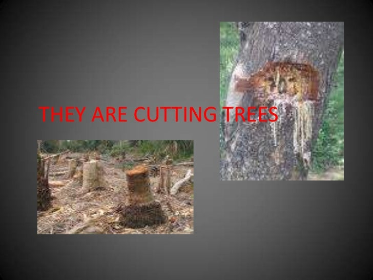 THEY ARE CUTTING TREES<br />
