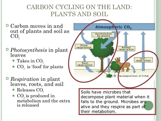 Greenhouse Effect Carbon Cycle Rising Temperatures