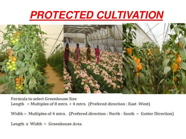 Green House Ppt - Best of ppt flowers scheme