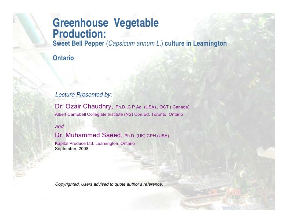 Greenhouse Vegetable Production: Sweet Bell Pepper (Capsicum annum L.) culture in Leamington Ontario    Lecture Presented ...