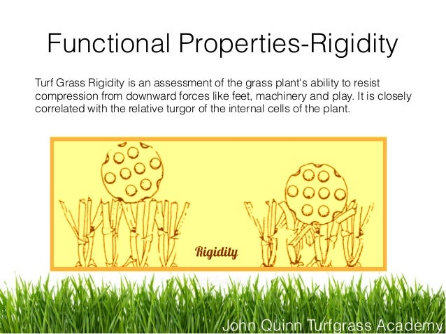 John Quinn Turfgrass Academy Functional Properties-Rigidity Turf Grass Rigidity is an assessment of the grass plant's abil...