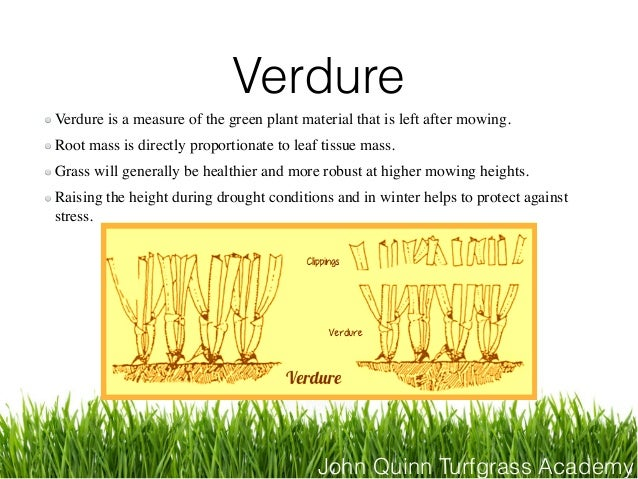 John Quinn Turfgrass Academy Verdure Verdure is a measure of the green plant material that is left after mowing. Root mass...
