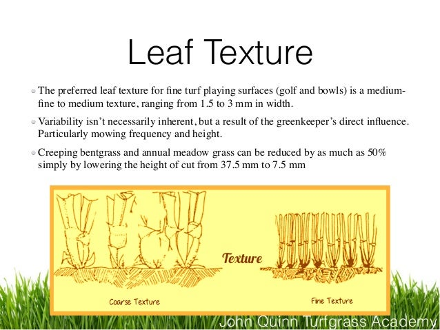 John Quinn Turfgrass Academy Leaf Texture The preferred leaf texture for fine turf playing surfaces (golf and bowls) is a m...