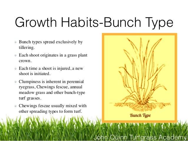 turfgrass types