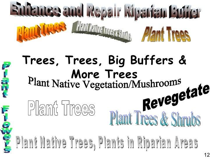 Trees, Trees, Big Buffers & More Trees Plant Trees Plant Trees & Shrubs Plant Trees Plant Trees Plant Native Trees & Shrub...