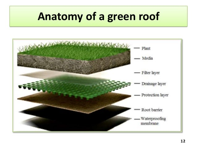 Anatomy Of A Green Roof 12 ...
