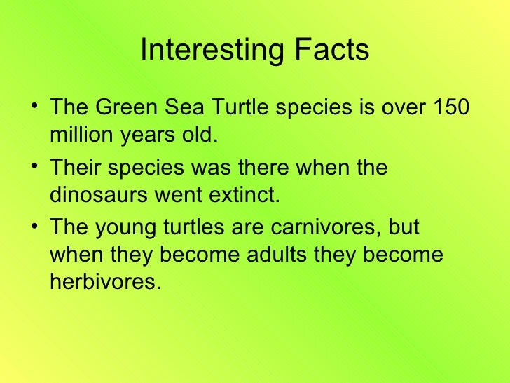 green sea turtle essay Free turtles papers, essays, and research papers  overview and endangered  status of kemp's ridley sea turtles - sea turtles there are currently seven.