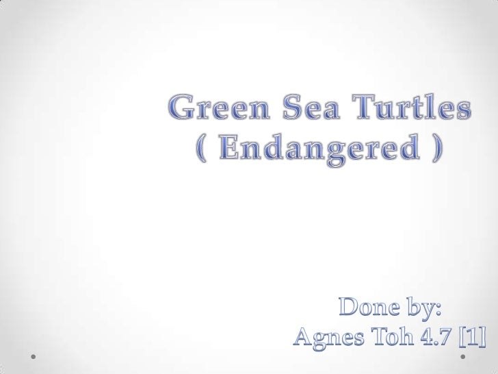 Green Sea Turtles<br />( Endangered )<br />Done by:<br />Agnes Toh 4.7 [1]<br />
