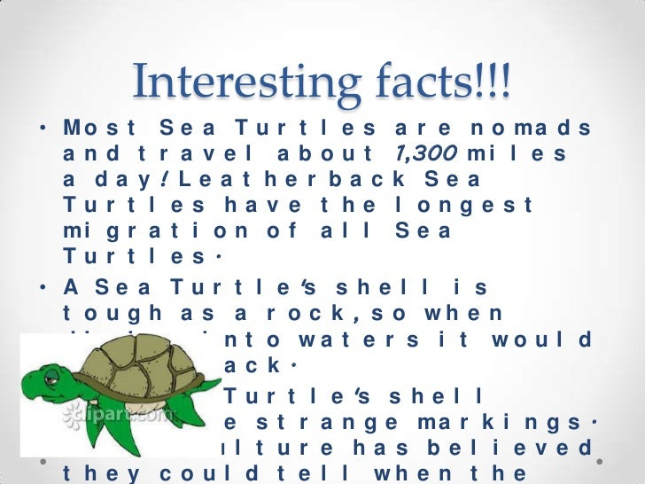 Interesting Facts About Maine For Kids