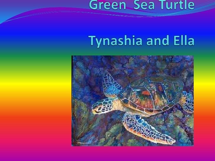 CharacteristicsGreen Sea turtles are omnivores. Green Sea turtles eatjellyfish, seaweed, crabs, shrimp, sponges, snails, a...