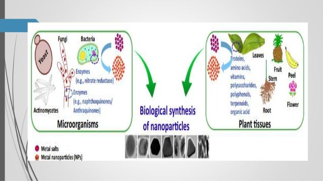 Green synthesis of nanoparticles