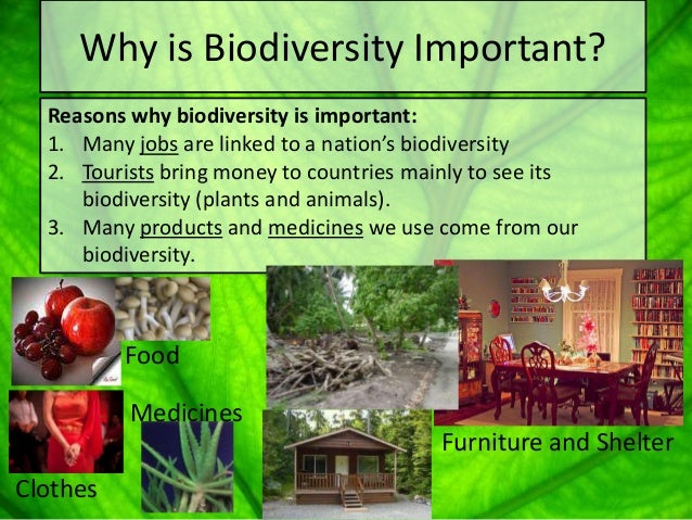 an introduction to the importance of biodiversity on earth Essays - largest database of quality sample essays and research papers on biodiversity in india.