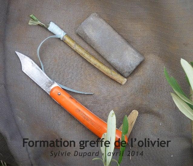 Formation greffe de l'olivier Sylvie Dupard - avril 2014