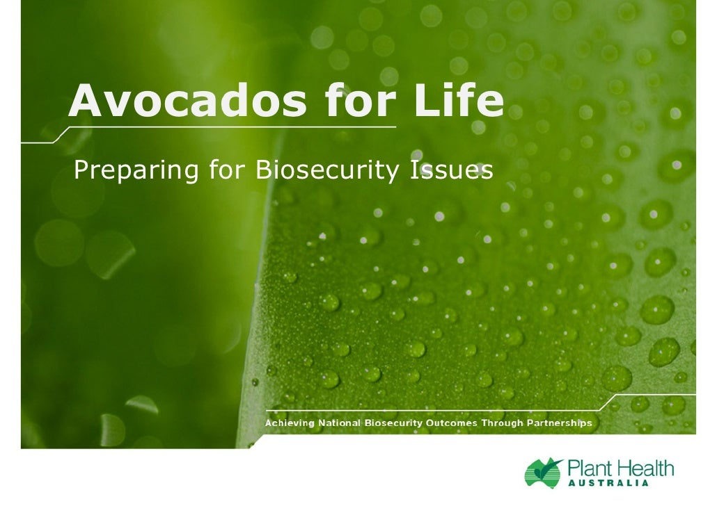 Avocados for Life Preparing for Biosecurity Issues