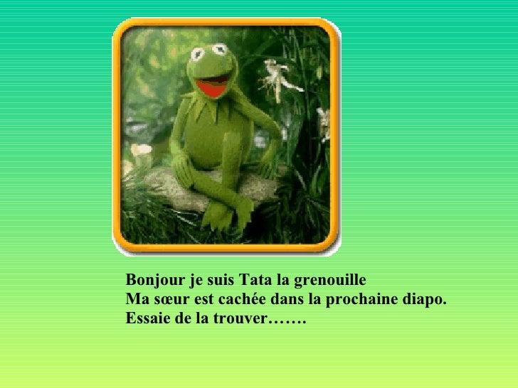 Bonjour je suis Tata la grenouille Ma sœur est cachée dans la prochaine diapo. Essaie de la trouver…….