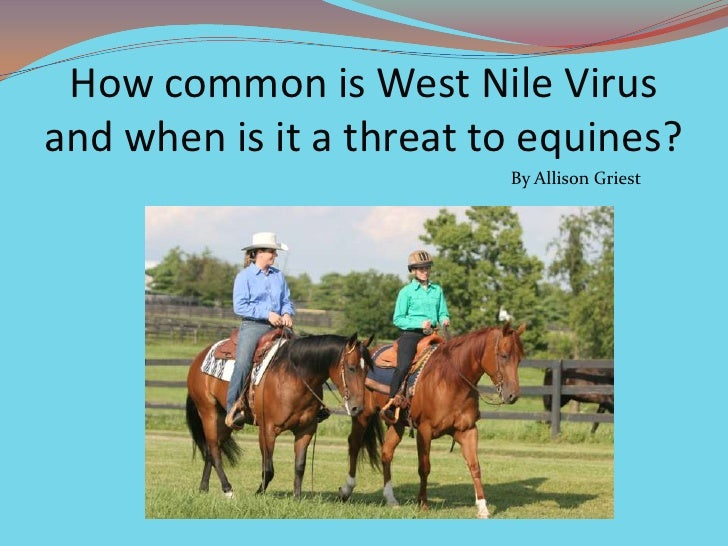 How common is West Nile Virus and when is it a threat to equines?<br />By Allison Griest<br />
