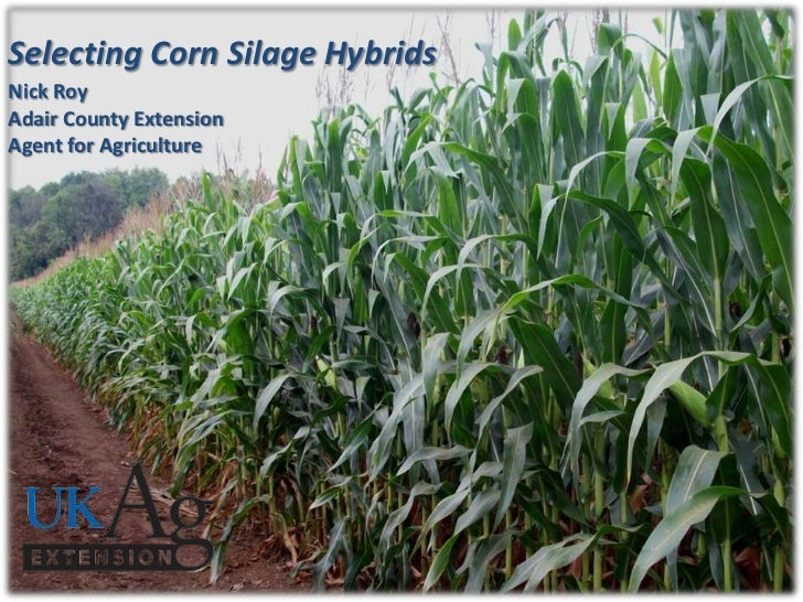 Selecting Corn Silage HybridsNick RoyAdair County ExtensionAgent for Agriculture