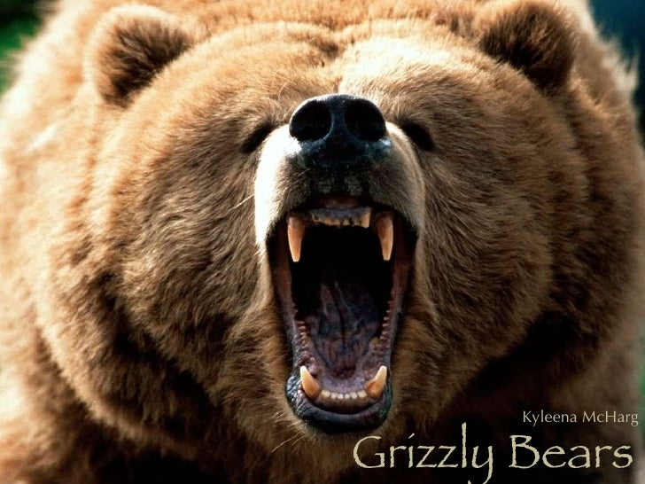 Grizzly Bears Kyleena McHarg