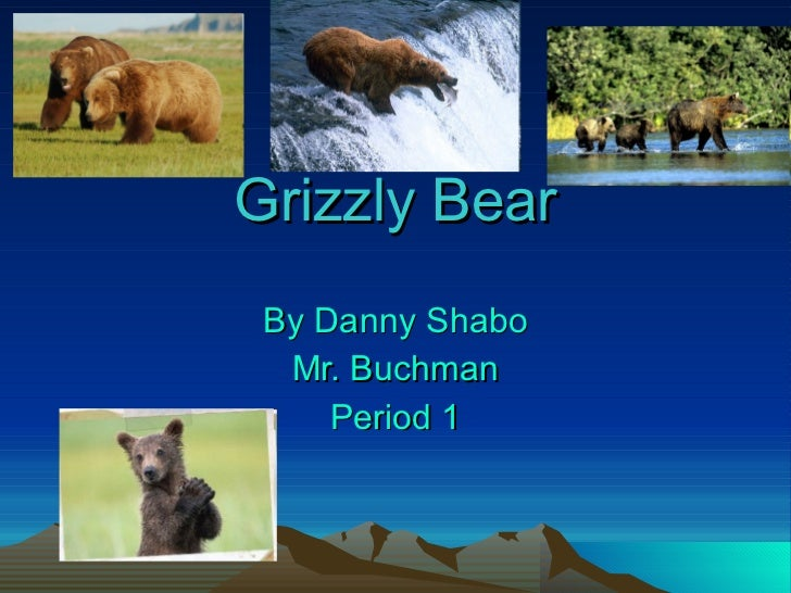 Grizzly Bear By Danny Shabo Mr. Buchman Period 1