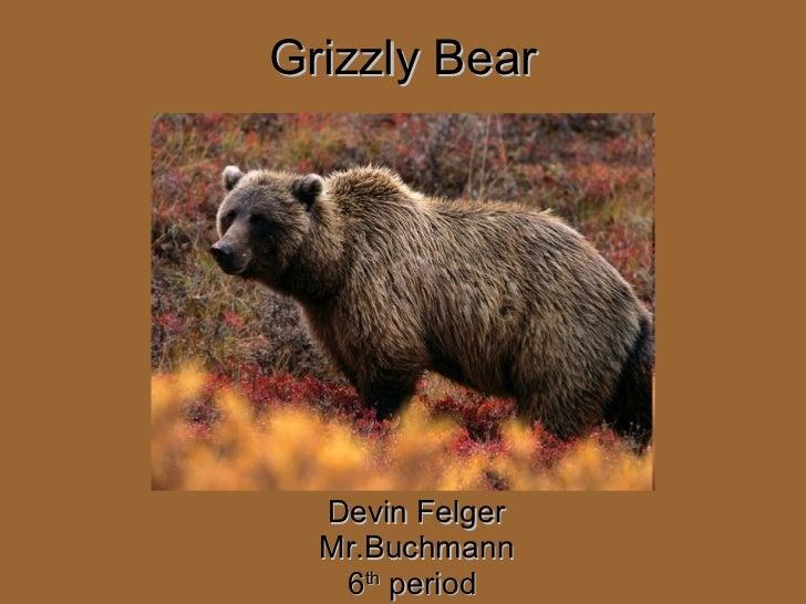 Grizzly Bear   Devin Felger Mr.Buchmann 6 th  period