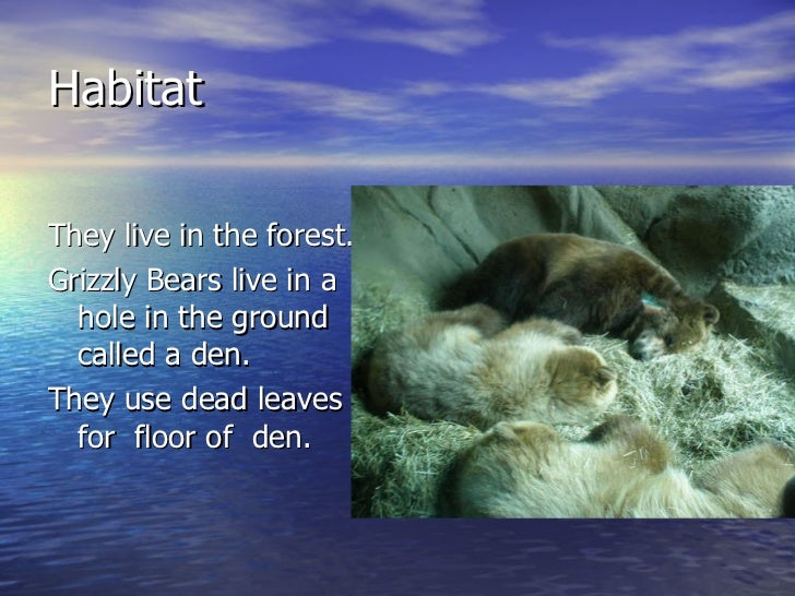 Habitat <ul><li>They live in the forest. </li></ul><ul><li>Grizzly Bears live in a hole in the ground called a den. </li><...