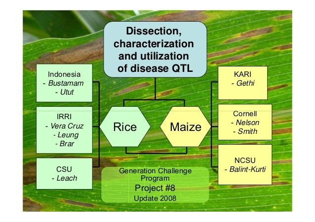Indonesia  - Bustamam  - Utut  KARI  - Gethi  Cornell  Dissection,  characterization  and utilization  of disease QTL  IRR...