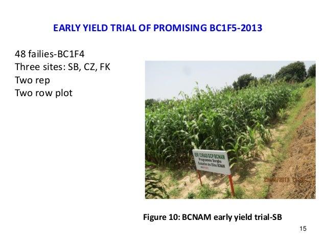 EARLY YIELD TRIAL OF PROMISING BC1F5-2013 48 failies-BC1F4 Three sites: SB, CZ, FK Two rep Two row plot Figure 10: BCNAM e...