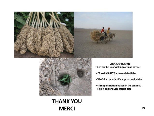 THANK YOU MERCI THANK YOU MERCI 19 Acknowledgments •GCP for the financial support and advice •IER and ICRISAT for research...