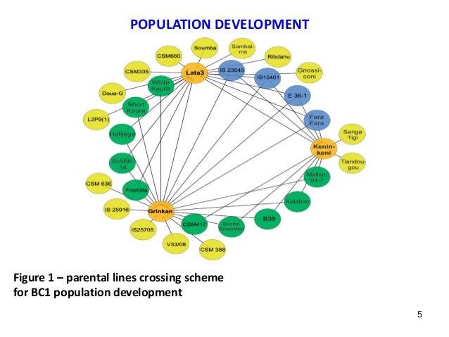 POPULATION DEVELOPMENT Figure 1 – parental lines crossing scheme for BC1 population development 5