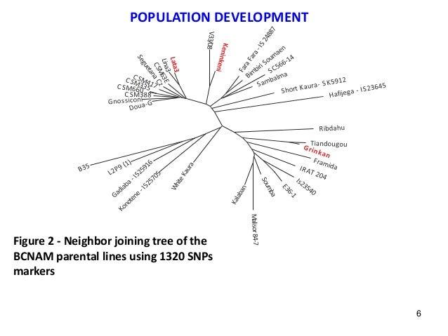 Figure 2 - Neighbor joining tree of the BCNAM parental lines using 1320 SNPs markers POPULATION DEVELOPMENT 6