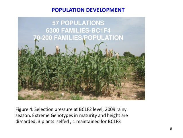 POPULATION DEVELOPMENT Figure 4. Selection pressure at BC1F2 level, 2009 rainy season. Extreme Genotypes in maturity and h...