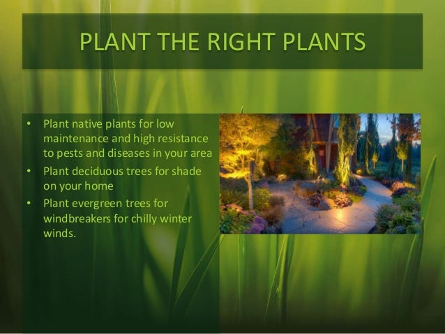 landscaping tips ecofriendly lawn care tips, Natural flower