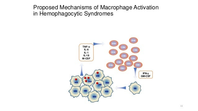 macrophage activation syndrome review