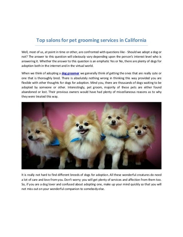 dog groomer salons near me in beverly hills