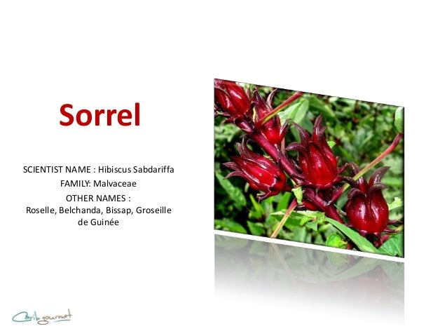 SorrelSCIENTIST NAME : Hibiscus Sabdariffa          FAMILY: Malvaceae           OTHER NAMES : Roselle, Belchanda, Bissap, ...
