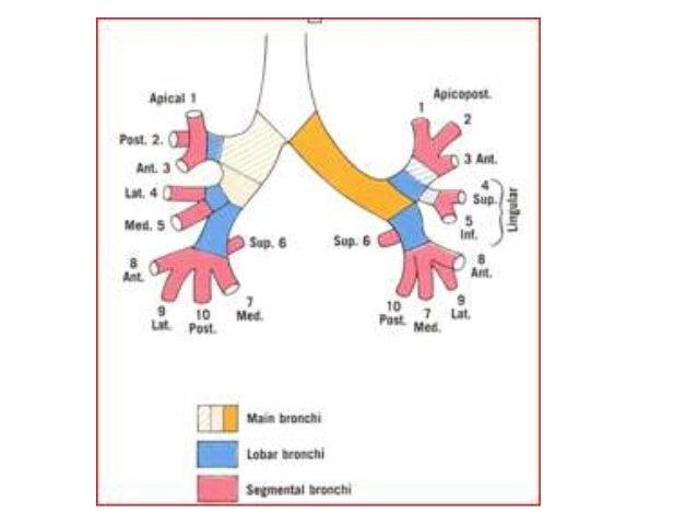 Development of anatomy
