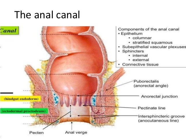 Anal Canal Histology 79