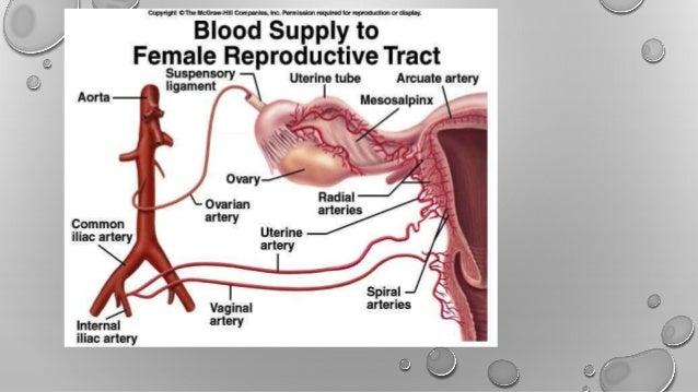 Histopath Grossing of uterus cervix &ovary