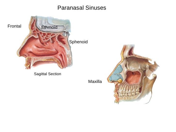 Inferior Meatus Nasolacrimal Duct