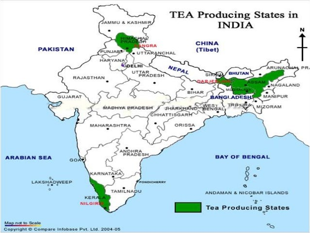 Export of Tea from India